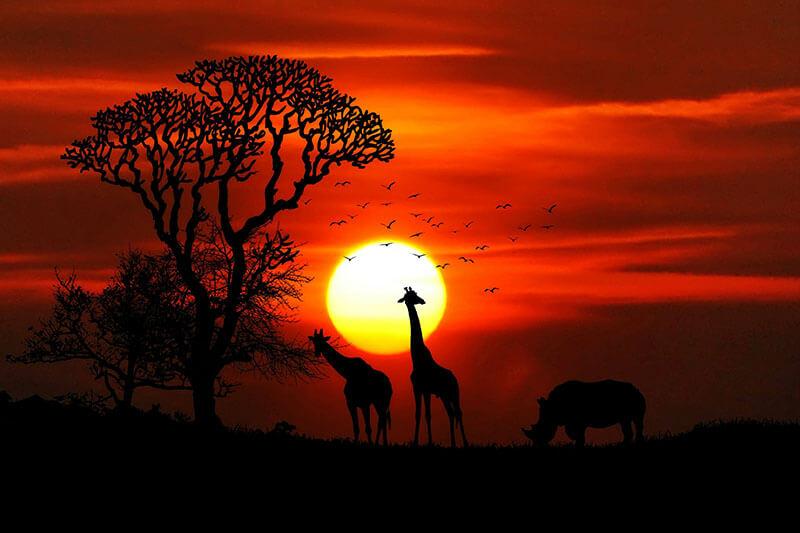 Faversham Safari